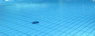 Einbrecher schwimmen ins Netz